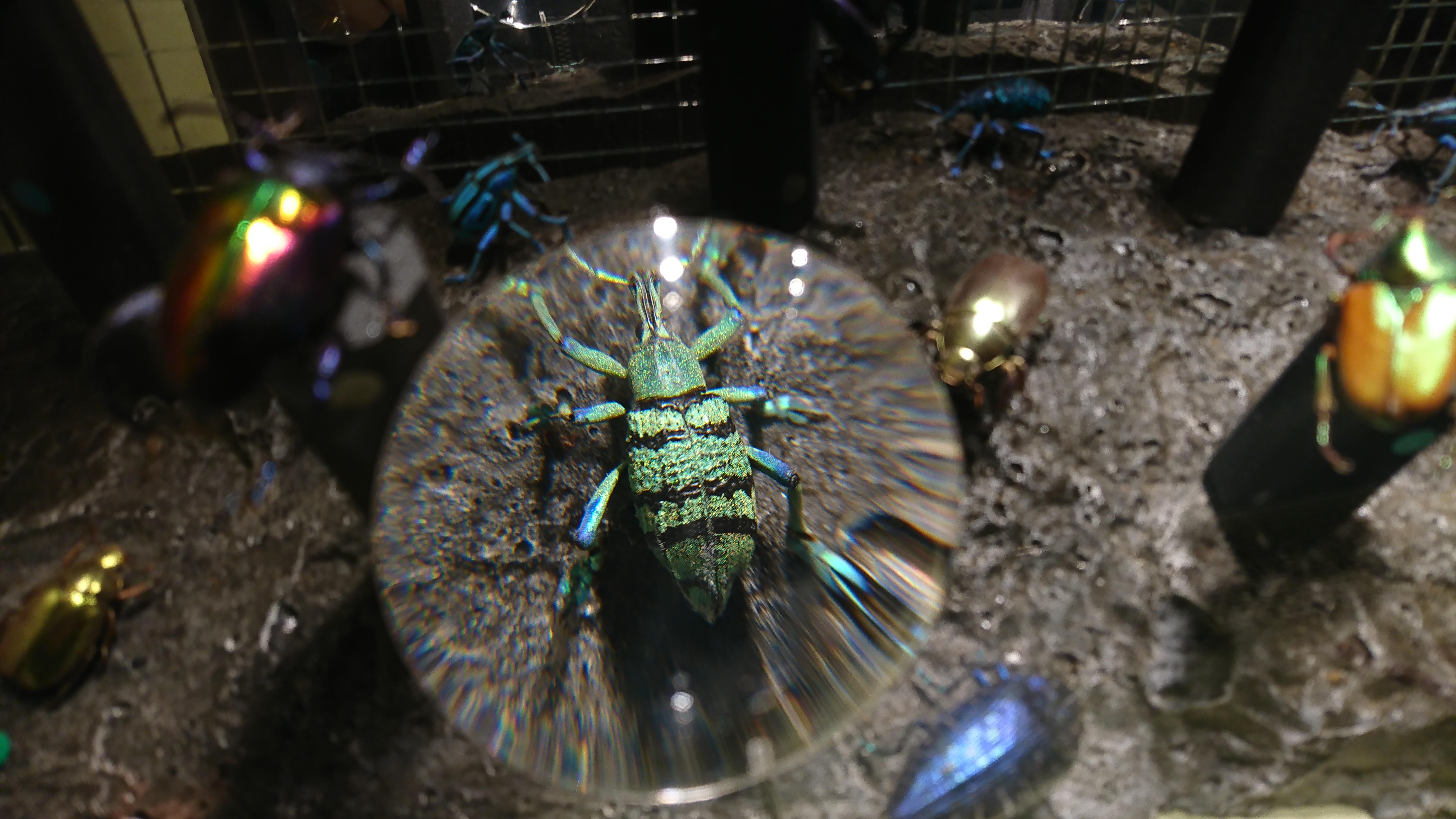 Insectpark. Escarabajo joya. @J R Aguirre