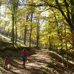 En busca de la castaña otoñal con los niños en el Castañar del Tiemblo