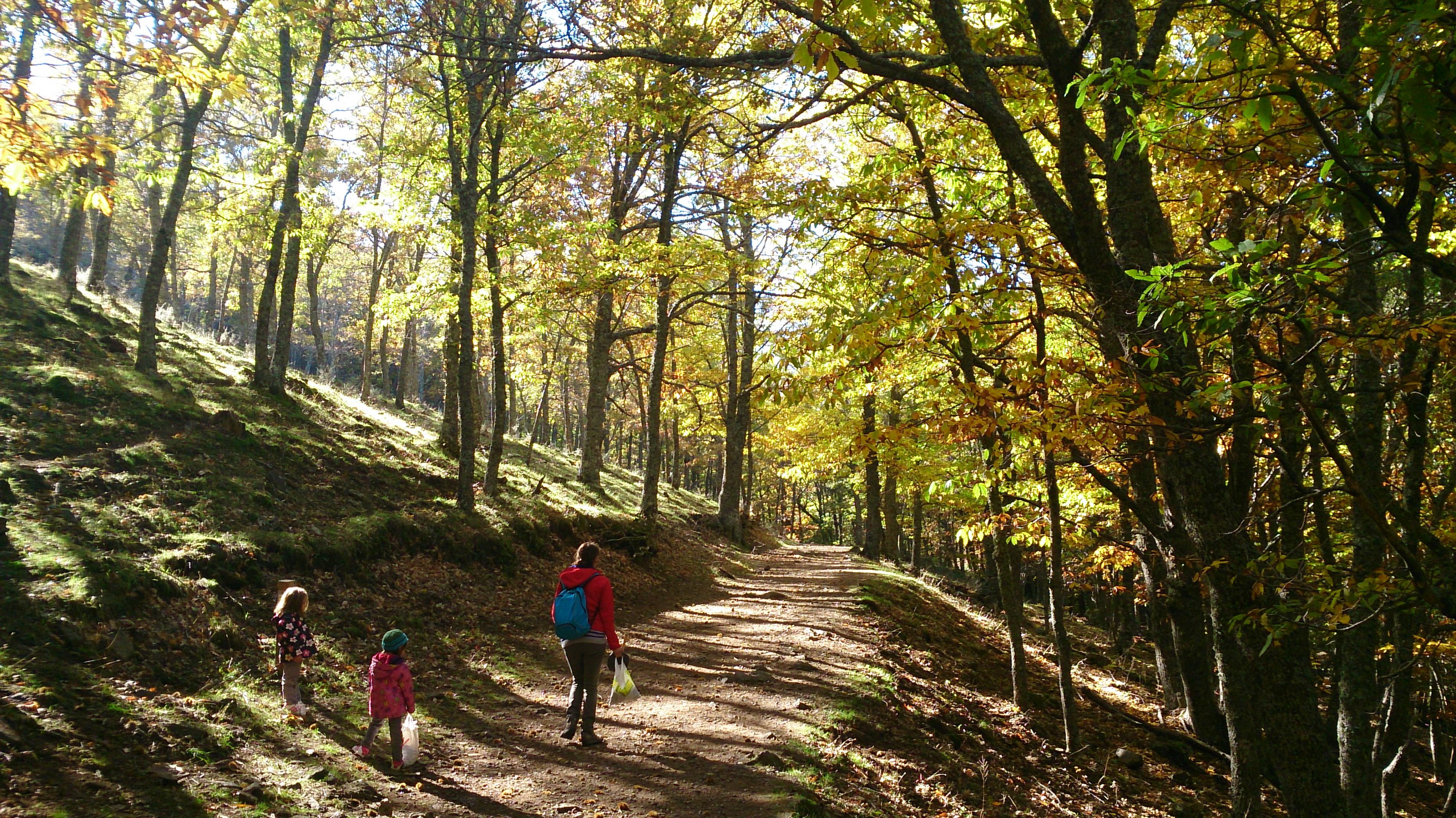 Ruta al Castañar del Tiemblo con niños. Ávila. ©José Ramón Aguirre