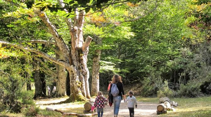 Un paseo por el otoño rojo del Hayedo de Montejo con niños