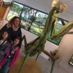 Insectpark. Aprendiendo sobre el increíble mundo del bicho