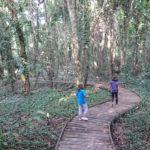 Bosque Atlántico del Jardín botánico de Gijón @Patricia Fernández