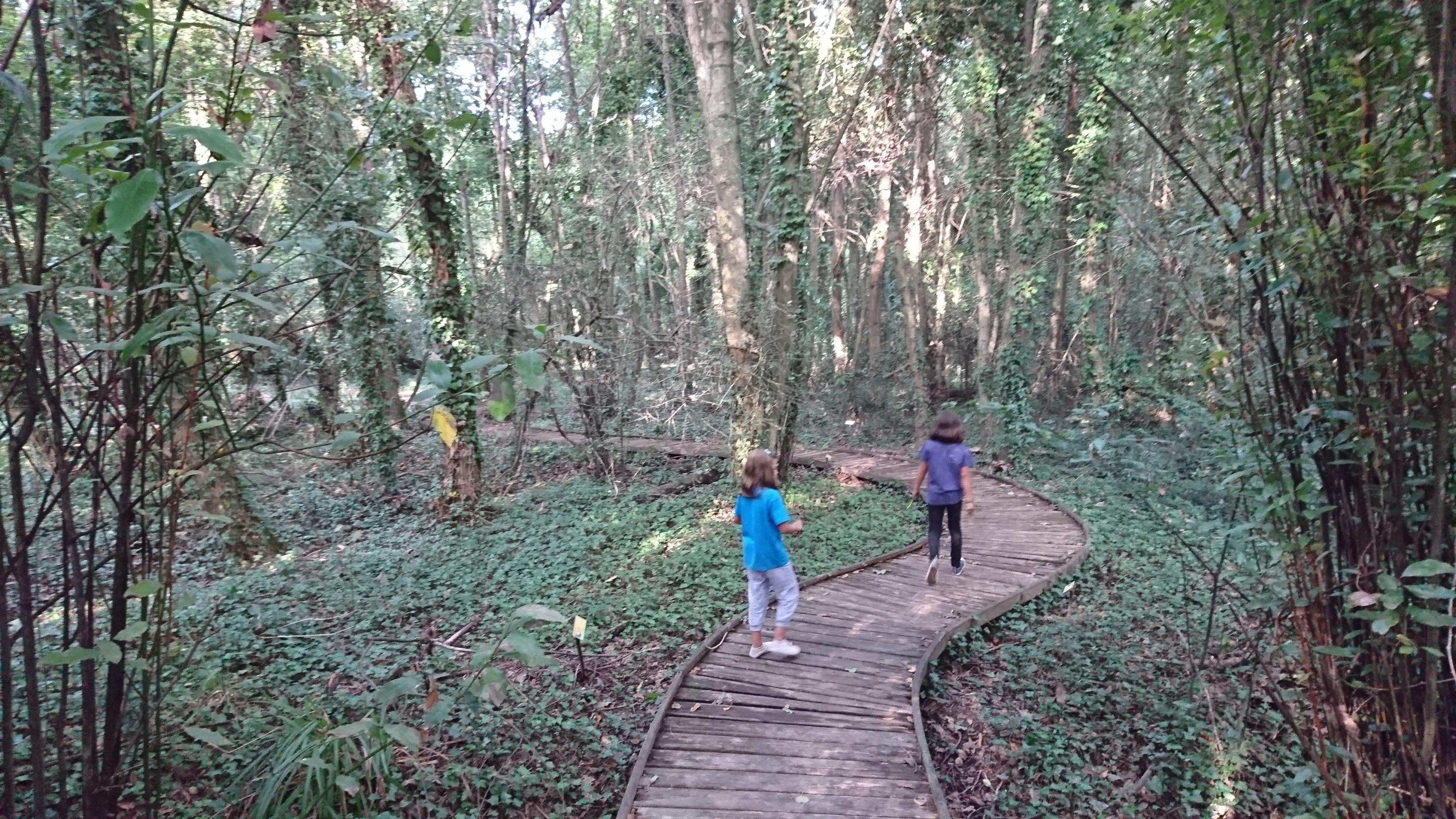Bosque cantábrico del Jardín botánico de Gijón @Patricia Fernández