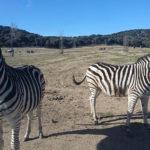 Zona de fauna salvaje del Safari Madrid ©Patricia Fernández