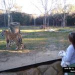 Safari Madrid, un zoológico muy diferente