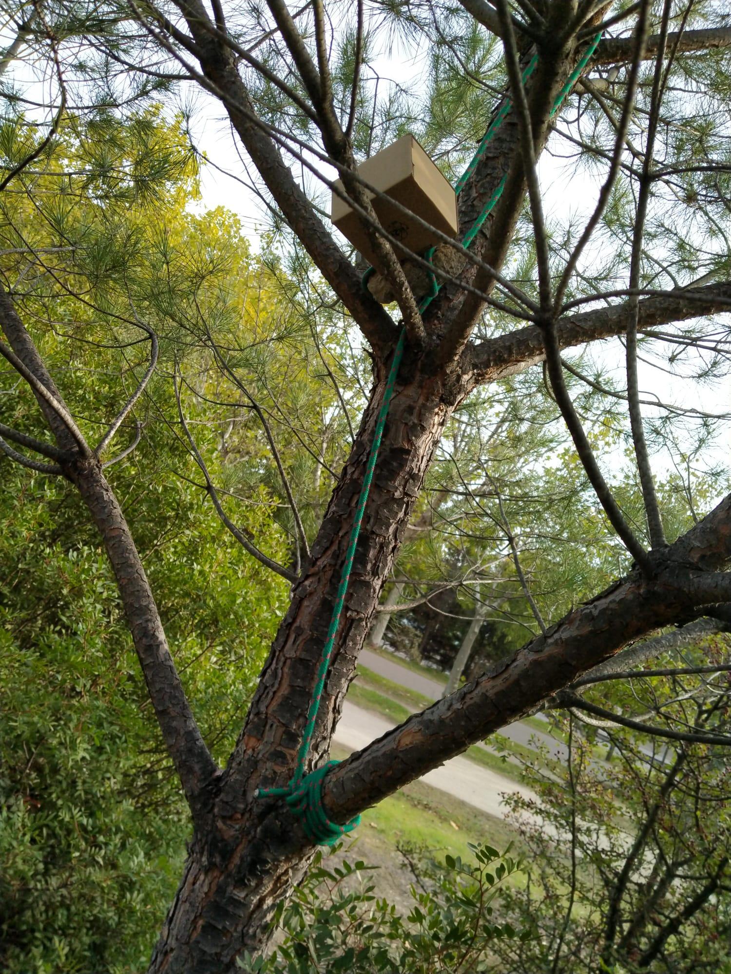 caja en el árbol con código morse en el interior