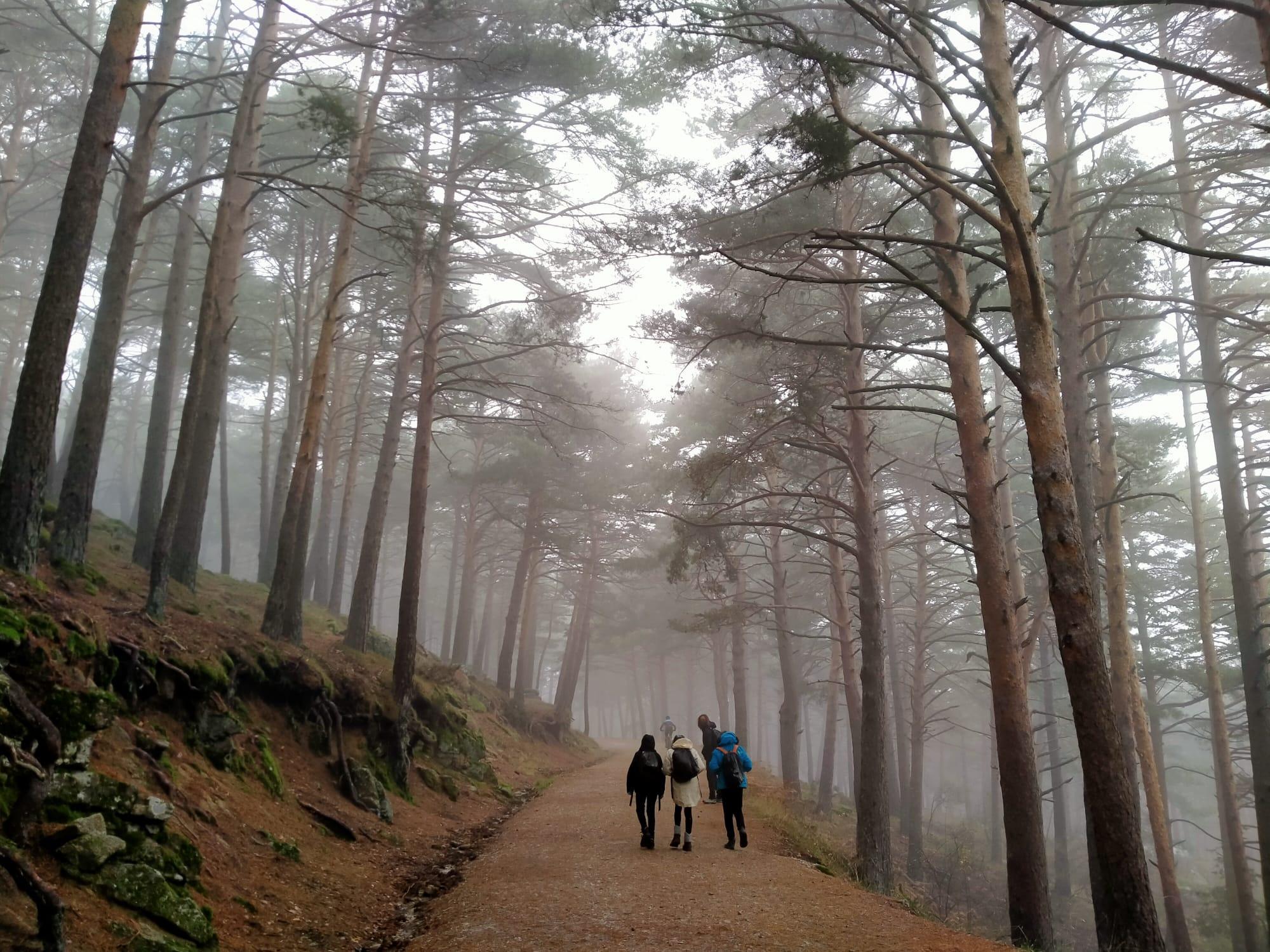 Ruta senderista al abedular de Canencia con niños. ©Patricia Fernández Pérez