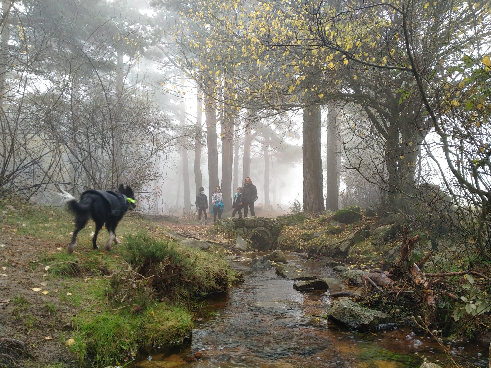 Ruta la Chorrera de Mojonavalle y el abedular de Canencia con niños